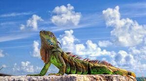 Preview wallpaper lizard, iguana, stone, sky, clouds
