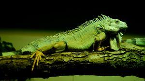 Preview wallpaper lizard, reptile, amphibian, scales, green