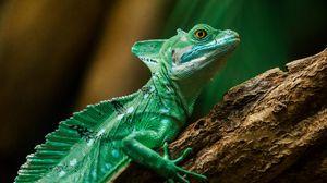 Preview wallpaper lizard, reptile, color, scales