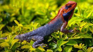Preview wallpaper lizard, reptile, grass, scales