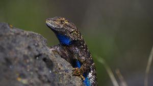 Preview wallpaper lizard, reptile, gray, blue, stone