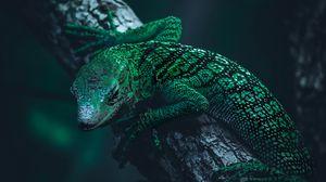 Preview wallpaper lizard, reptile, green