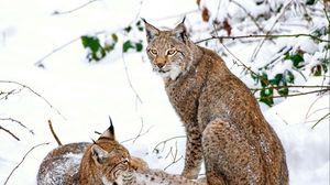 Preview wallpaper lynx, steam, snow, predators
