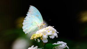 Preview wallpaper macro, butterfly, wings, flower, white