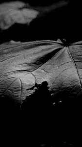 Preview wallpaper maple, leaf, macro, black and white, black