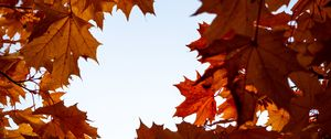 Preview wallpaper maple, leaves, branches, autumn, yellow, brown
