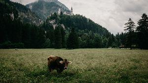 Preview wallpaper meadow, bull, mountains, castle, grass, bavaria