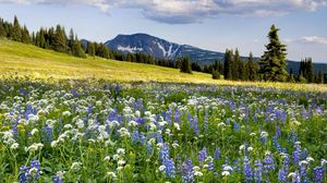 Preview wallpaper meadow, flowers, mountains, slope