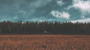 Preview wallpaper meadow, forest, field, sky, trees