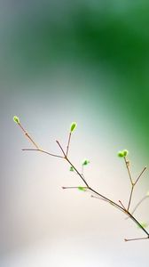 Preview wallpaper minimalism, spring, macro, branch
