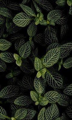 240x400 Wallpaper mint, leaves, aerial view