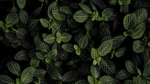 Preview wallpaper mint, leaves, aerial view