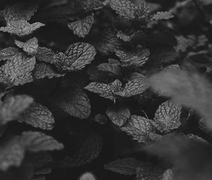 Preview wallpaper mint, leaves, bw, bushes