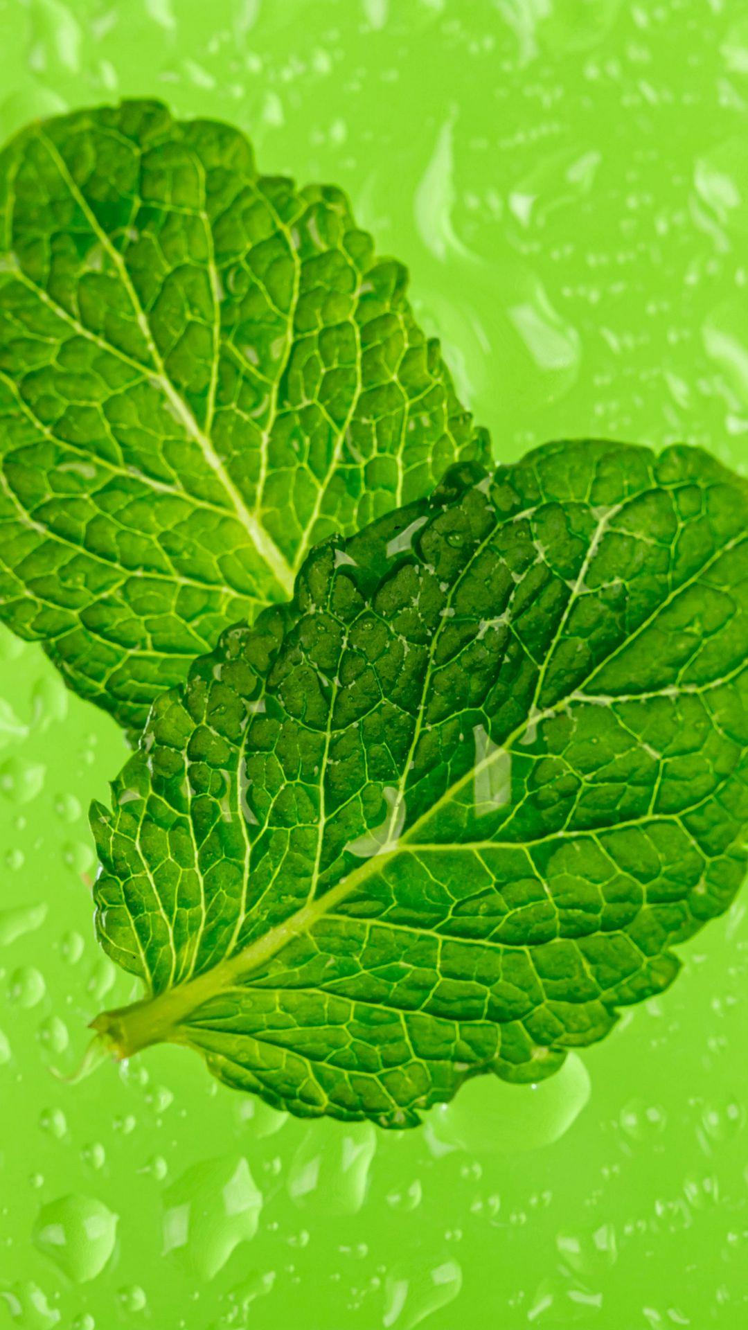 1080x1920 Wallpaper mint, leaves, drops, macro, wet, green