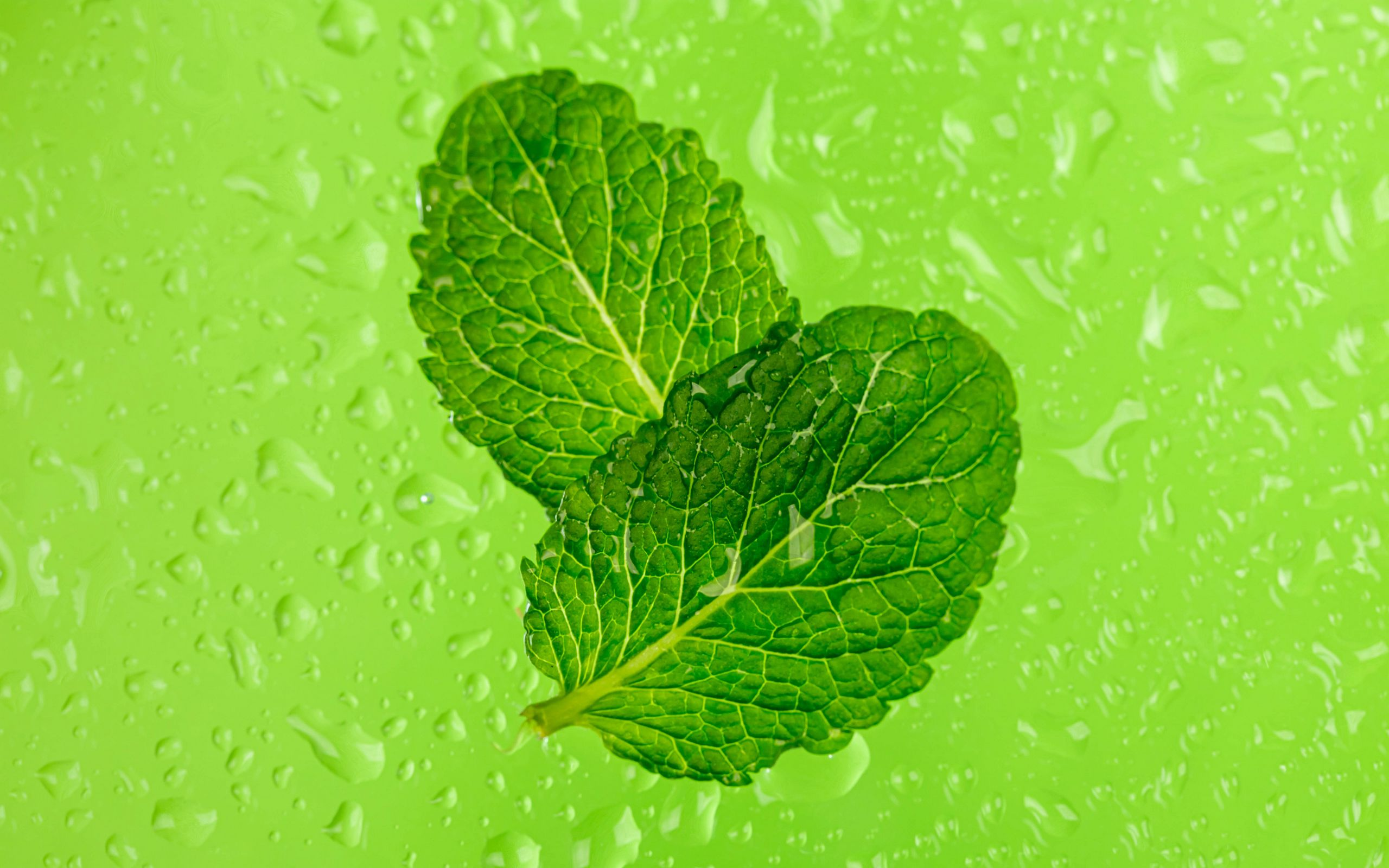 2560x1600 Wallpaper mint, leaves, drops, macro, wet, green