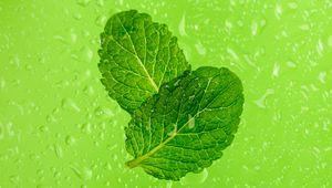 Preview wallpaper mint, leaves, drops, macro, wet, green