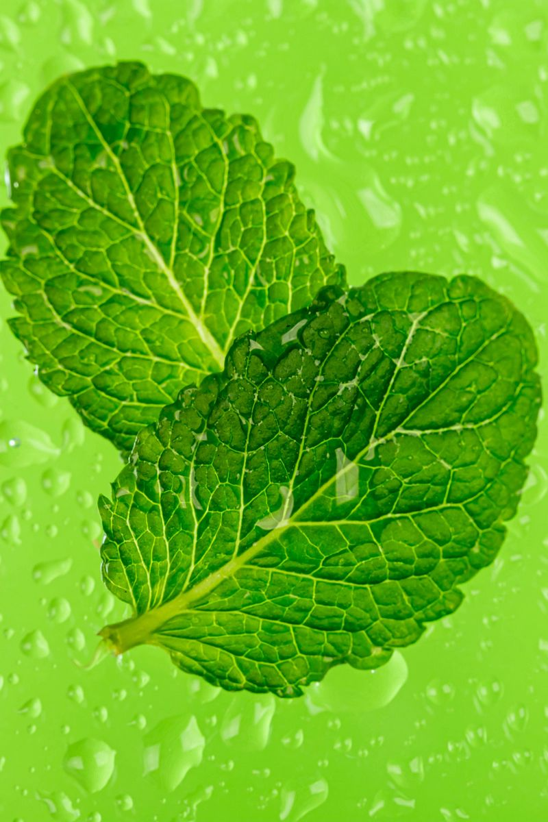 800x1200 Wallpaper mint, leaves, drops, macro, wet, green