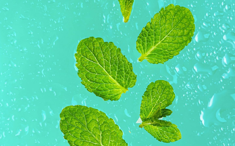 1440x900 Wallpaper mint, leaves, drops, macro, green