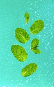 Preview wallpaper mint, leaves, drops, macro, green