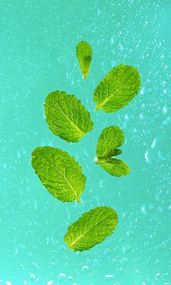 240x400 Wallpaper mint, leaves, drops, macro, green