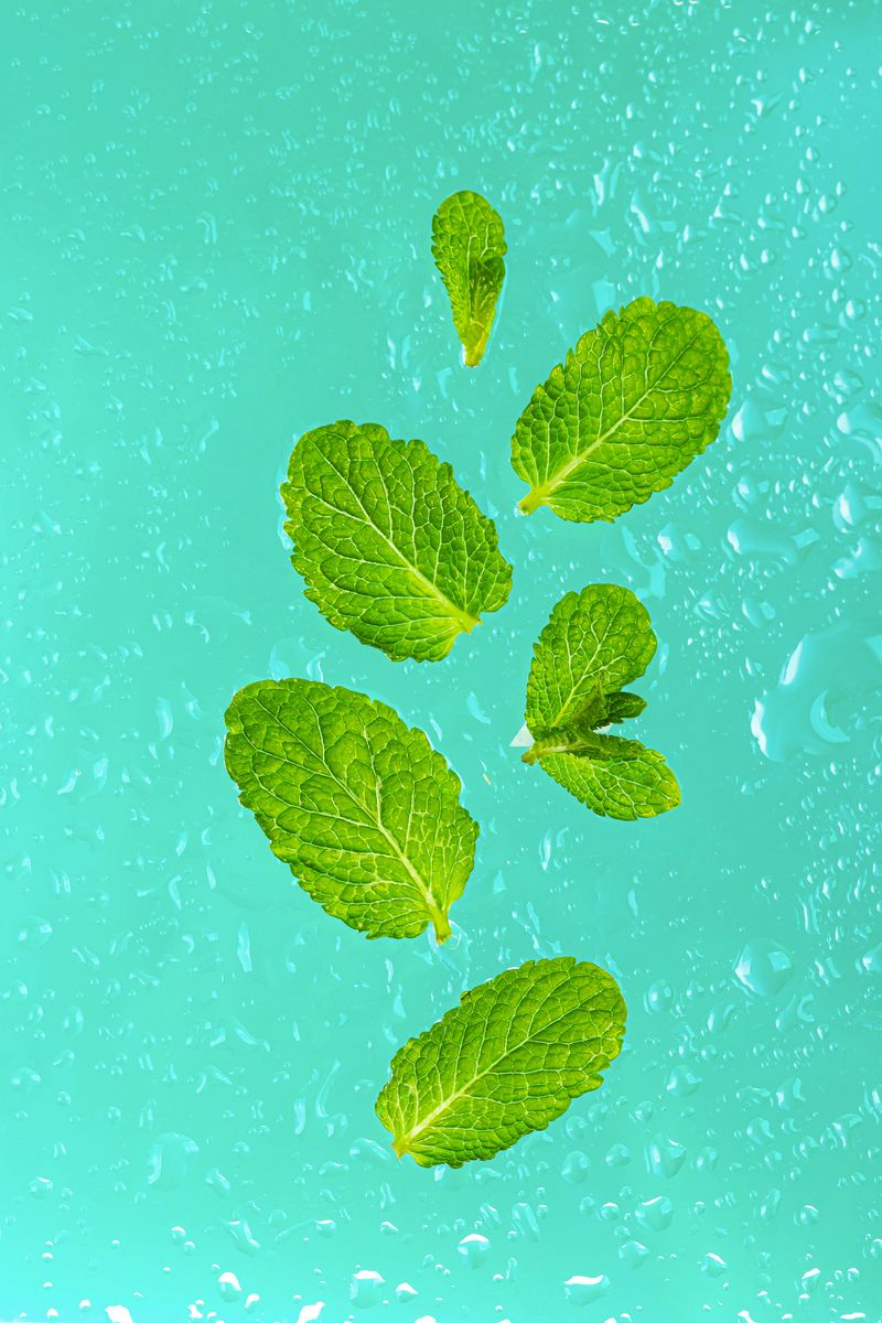 800x1200 Wallpaper mint, leaves, drops, macro, green