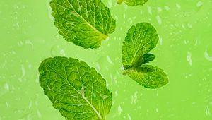 Preview wallpaper mint, leaves, drops, green, macro