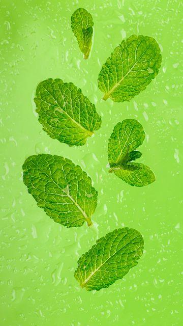 360x640 Wallpaper mint, leaves, drops, green, macro