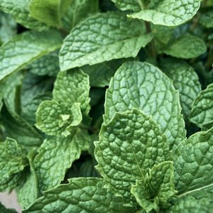 Preview wallpaper mint, leaves, macro, green