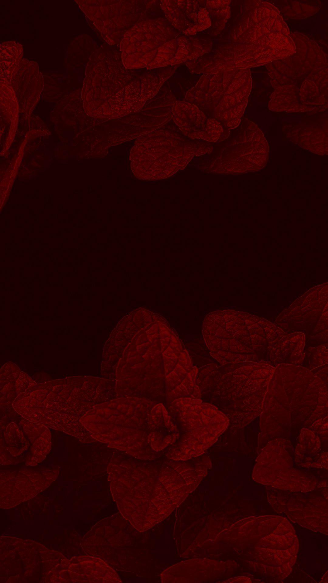 1080x1920 Wallpaper mint, leaves, plant, macro, red, dark
