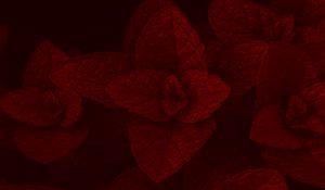 Preview wallpaper mint, leaves, plant, macro, red, dark