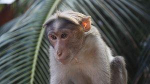 Preview wallpaper monkey, branch, tree, animal
