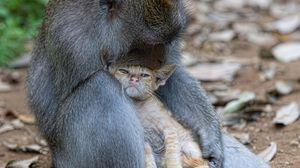 Preview wallpaper monkey, cat, hugs, caring