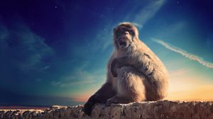 Preview wallpaper monkey, primate, sits, conceived, animal, wildlife