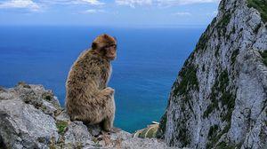 Preview wallpaper monkey, rocks, sea, sky