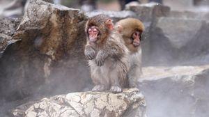 Preview wallpaper monkeys, sit, kids