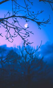 Preview wallpaper moon, branches, trees, twilight, purple, dark