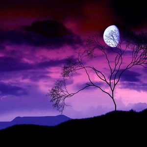 Preview wallpaper moon, night, sky, lilac, tree, bush, branches, outlines