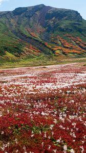 Preview wallpaper mountain, field, flowers, landscape