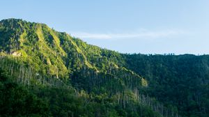 Preview wallpaper mountain, forest, trees, landscape, green