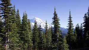 Preview wallpaper mountain, peak, trees, forest, landscape, nature