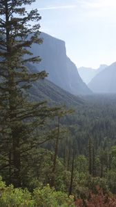Preview wallpaper mountains, forest, trees, aerial view, nature