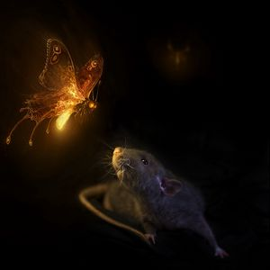 Preview wallpaper mouse, butterfly, black background, rat