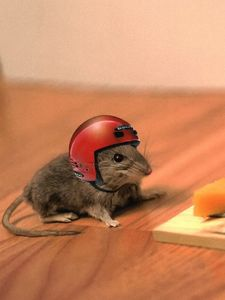 Preview wallpaper mouse, cheese, mouse trap, helmet, funny, situation