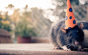 Preview wallpaper mouse, hat, cap, rodent