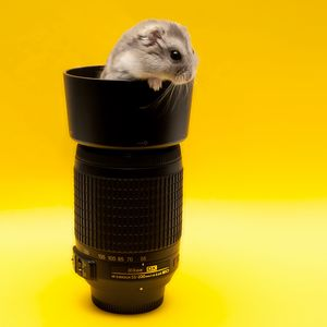 Preview wallpaper mouse, lens, climb, rodent