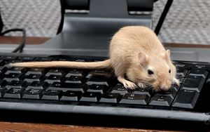 Preview wallpaper mouse, rat, keyboard, climb, rodent