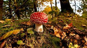 Preview wallpaper mushroom, grass, autumn