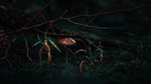 Preview wallpaper mushroom, moss, grass, branch, macro