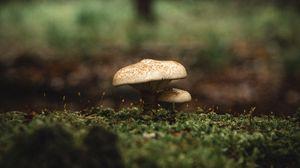 Preview wallpaper mushroom, moss, macro, grass