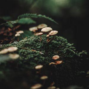 Preview wallpaper mushrooms, moss, blur, macro